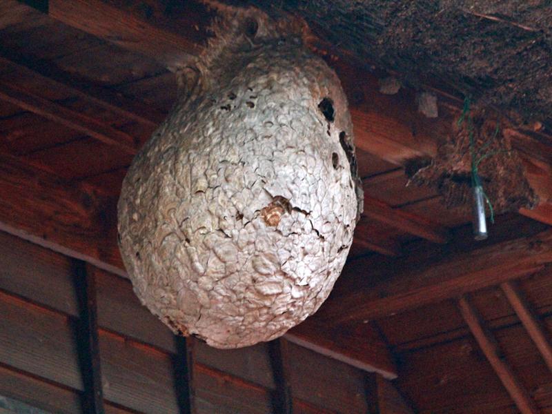 空き家に蜂の巣ができたら?駆除方法と対策を解説!
